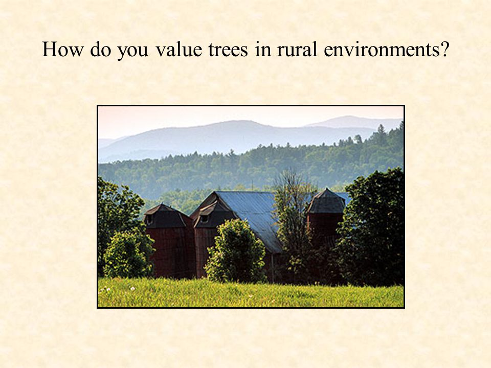 How do you value trees in rural environments