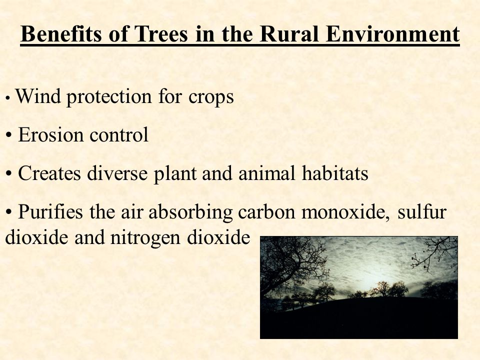 Benefits of Trees in the Rural Environment