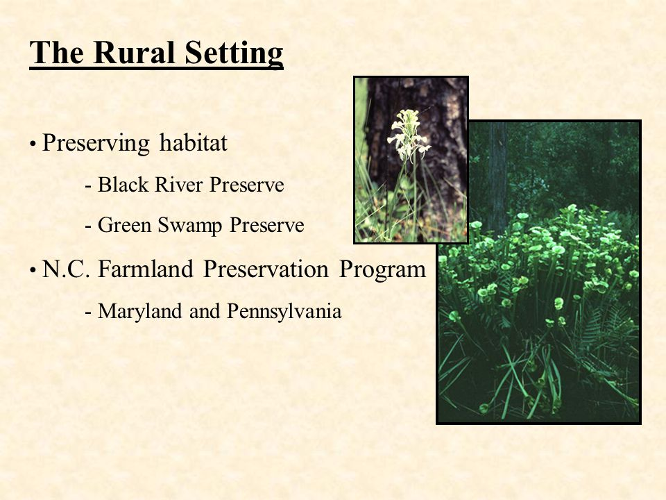 The Rural Setting Preserving habitat - Black River Preserve