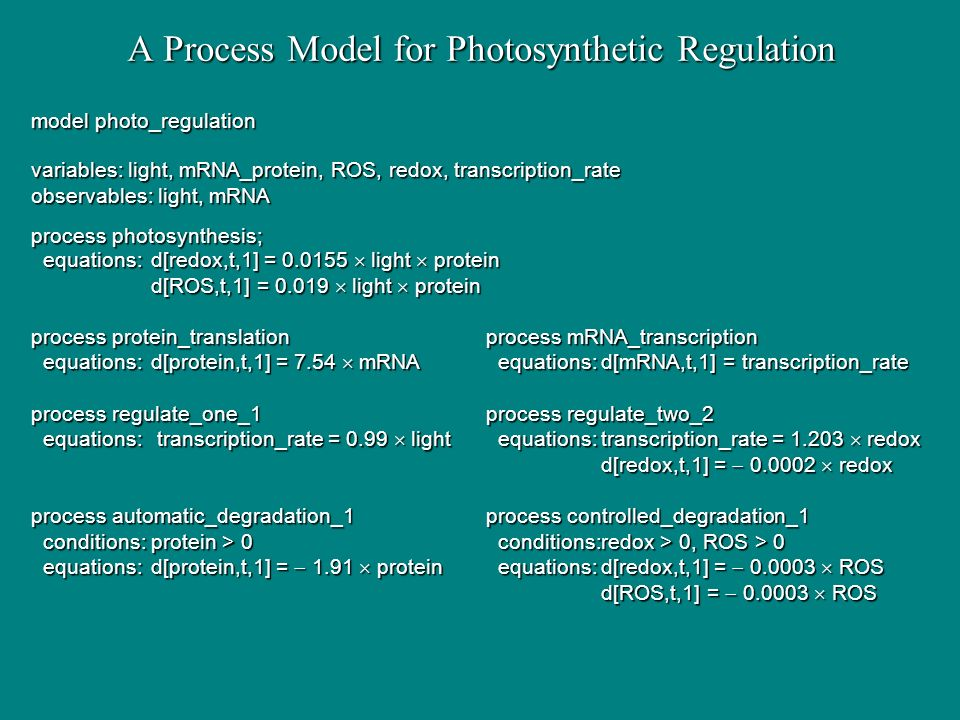 A Process Model for Photosynthetic Regulation