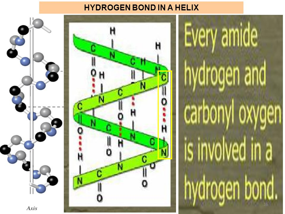 HYDROGEN BOND IN A HELIX