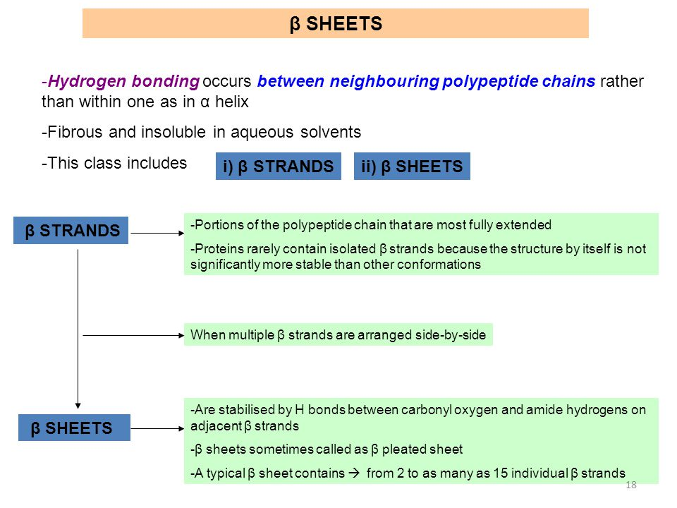 β SHEETS Hydrogen bonding occurs between neighbouring polypeptide chains rather than within one as in α helix.