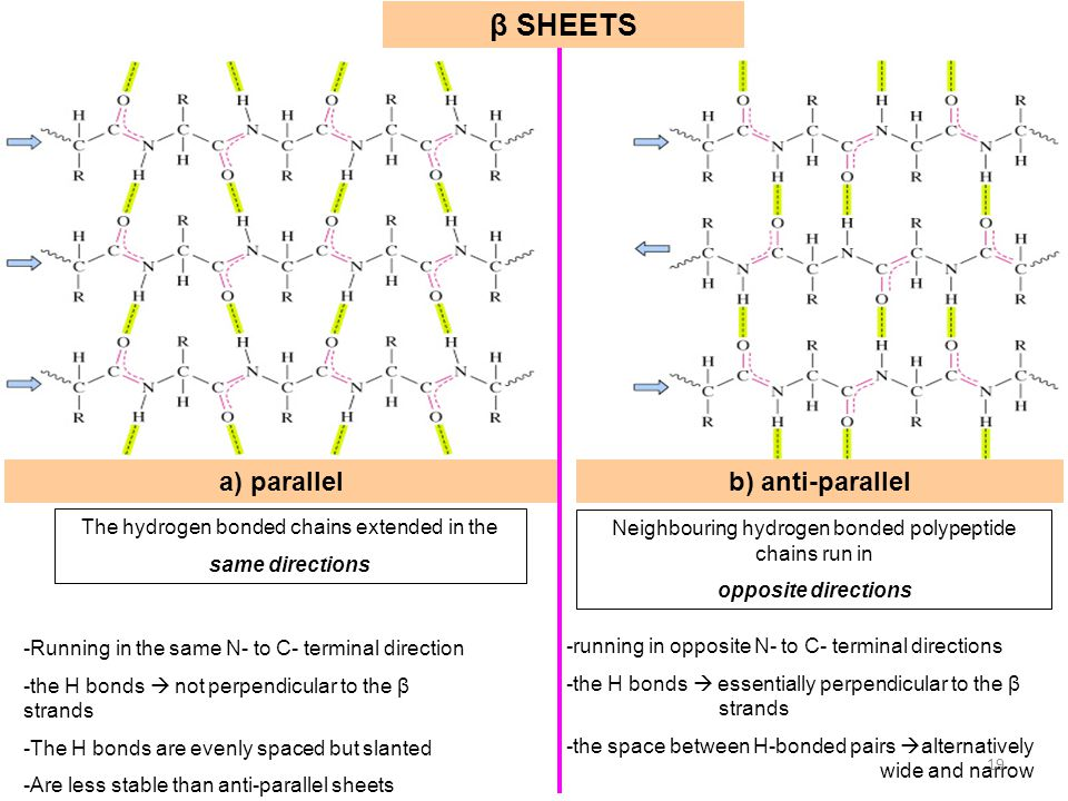 β SHEETS a) parallel b) anti-parallel
