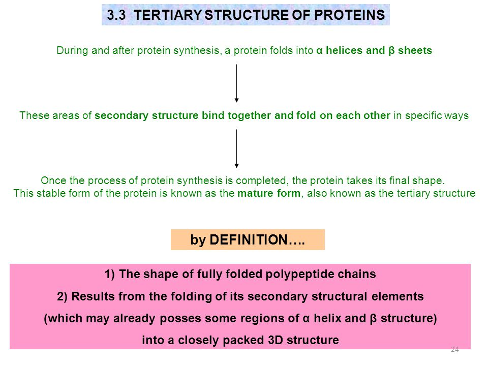 3.3 TERTIARY STRUCTURE OF PROTEINS