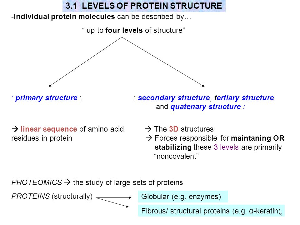 3.1 LEVELS OF PROTEIN STRUCTURE