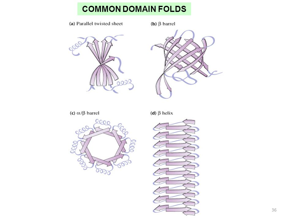 COMMON DOMAIN FOLDS