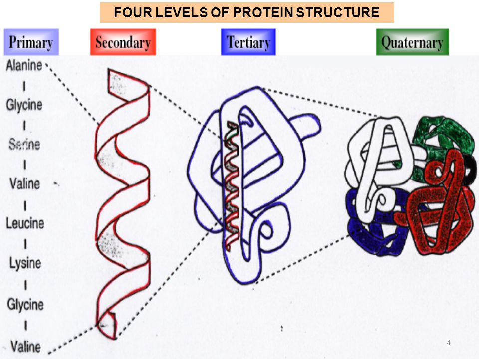 levels of protein structure pdf