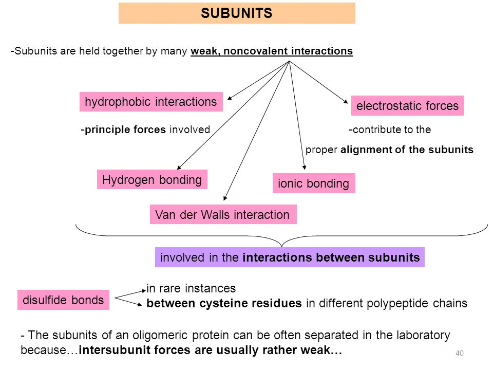 proper alignment of the subunits