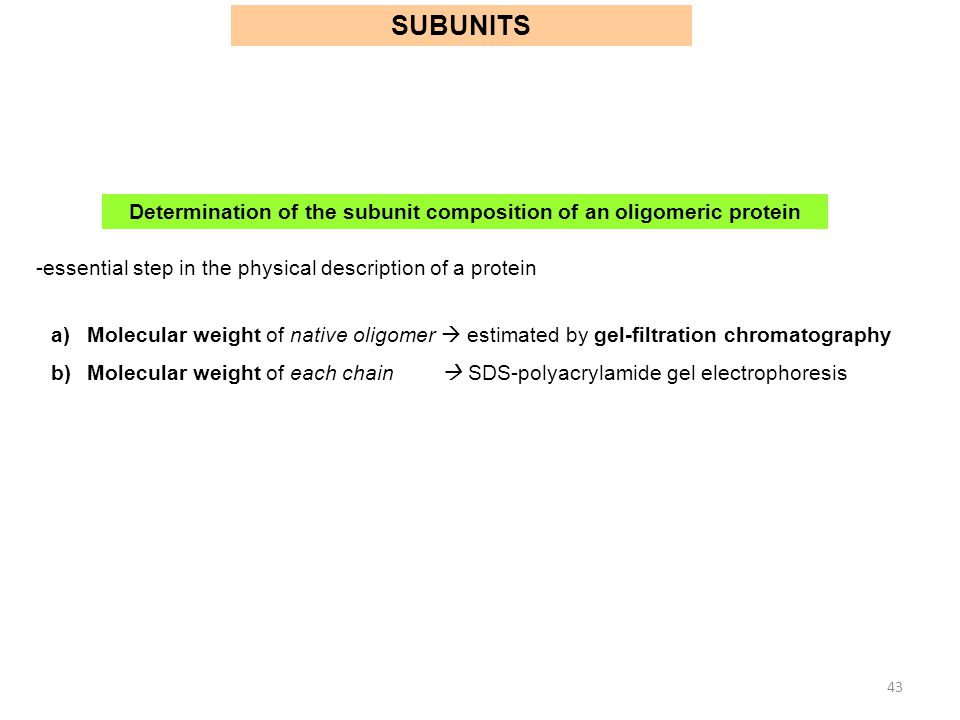 Determination of the subunit composition of an oligomeric protein