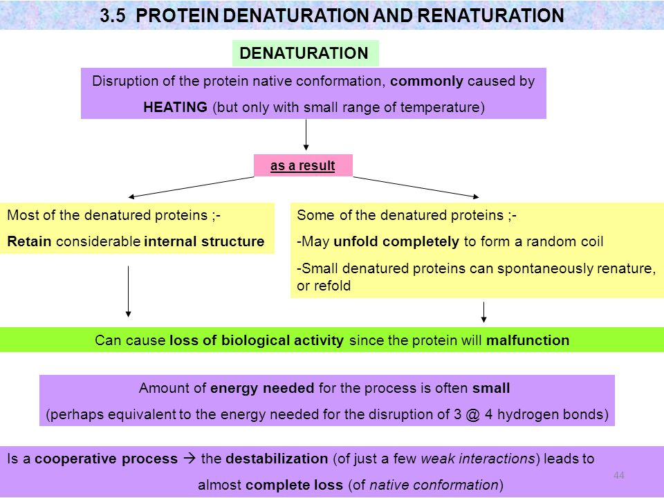 3.5 PROTEIN DENATURATION AND RENATURATION