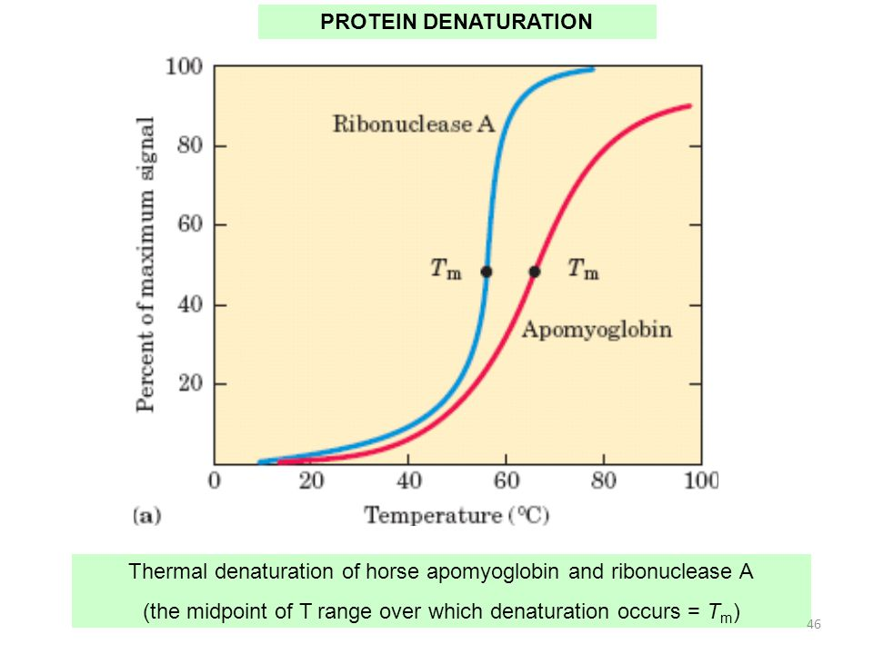 Thermal denaturation of horse apomyoglobin and ribonuclease A