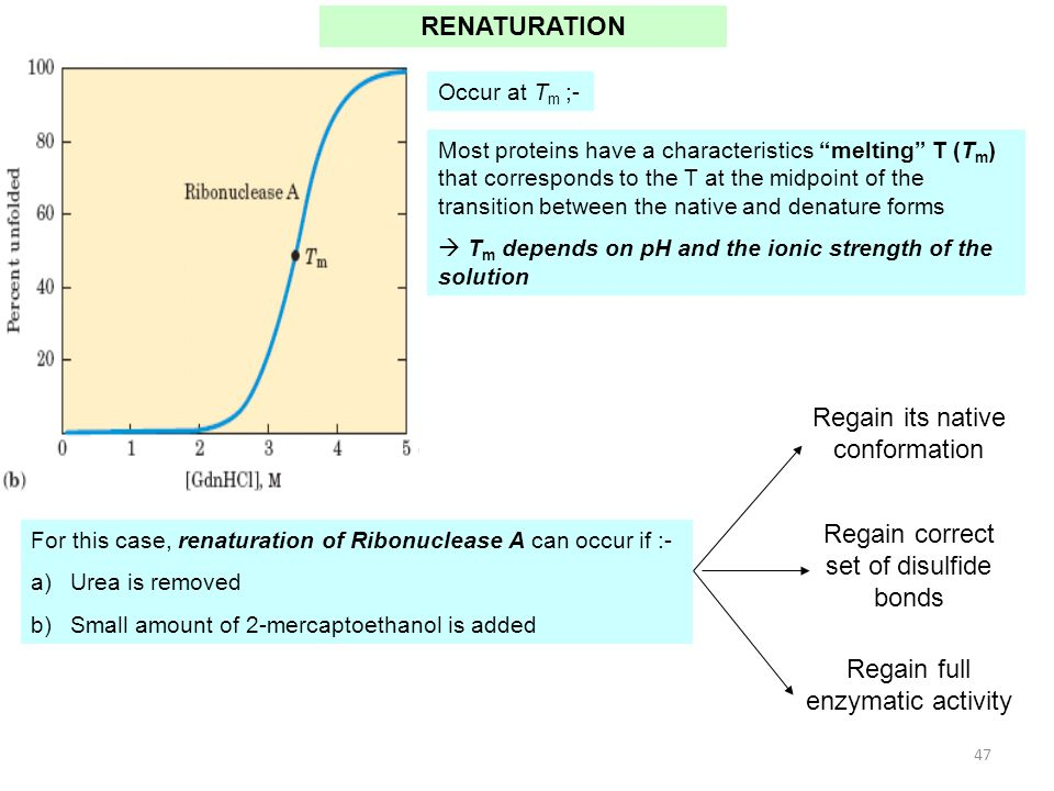 Regain its native conformation