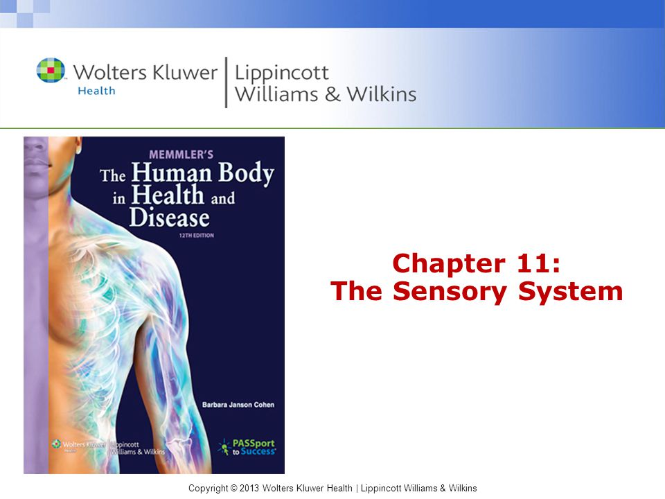 Chapter 11: The Sensory System - ppt video online download