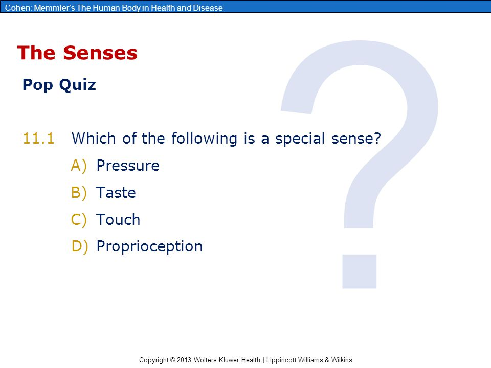 Tolle Anatomy And Physiology Special Senses Powerpoint Galerie ...