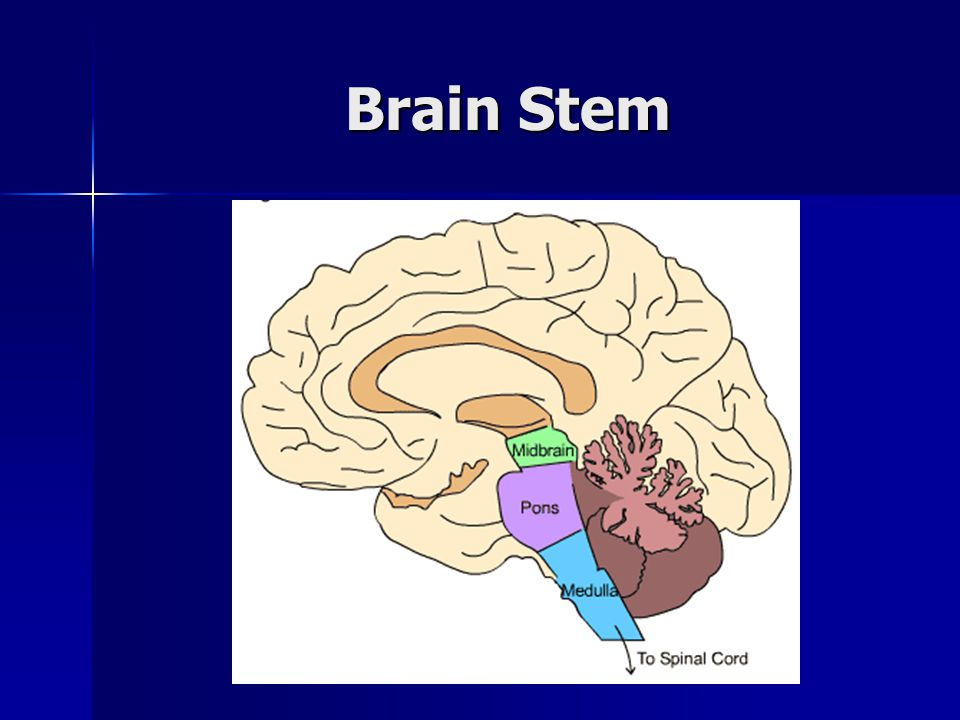 Brain Death Anatomy and Physiology - ppt video online download