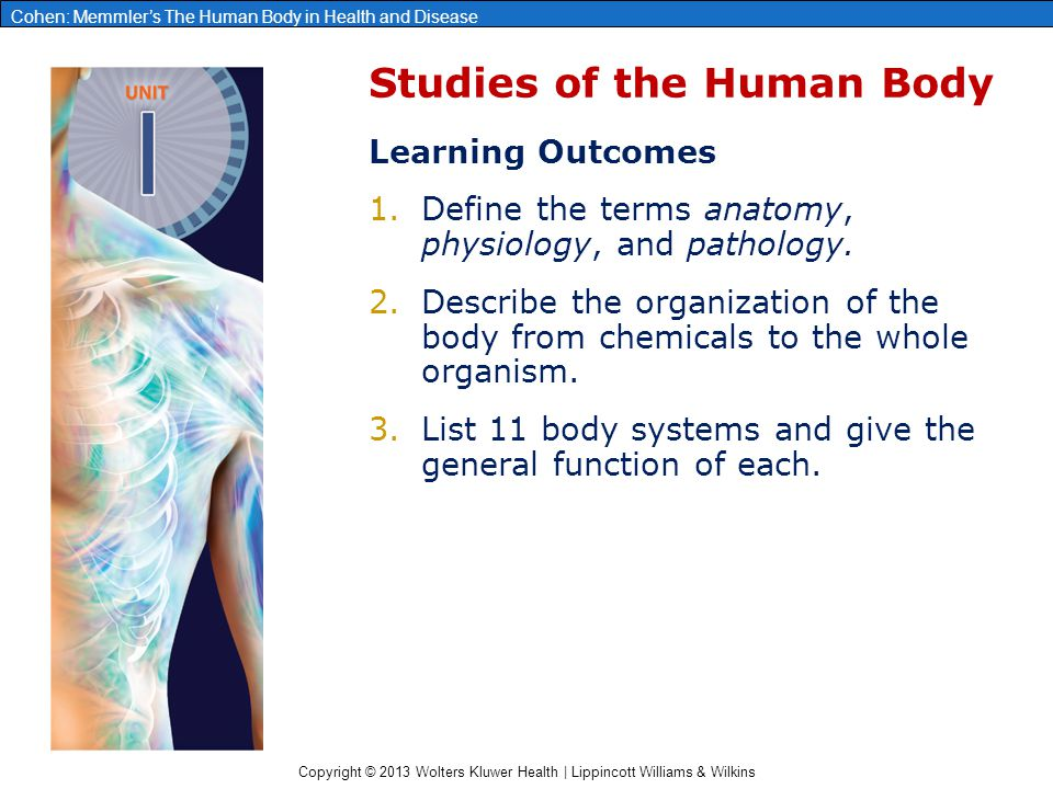 Chapter 1: Organization of the Human Body - ppt video online download