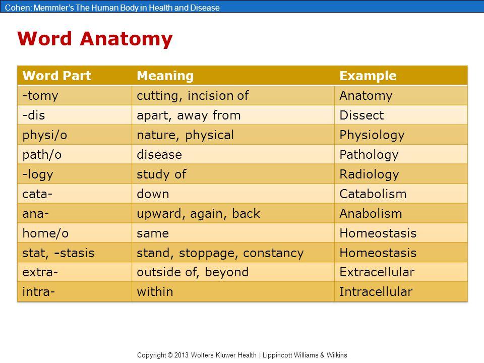 Fantástico Anatomy Word Parts Foto - Imágenes de Anatomía Humana ...