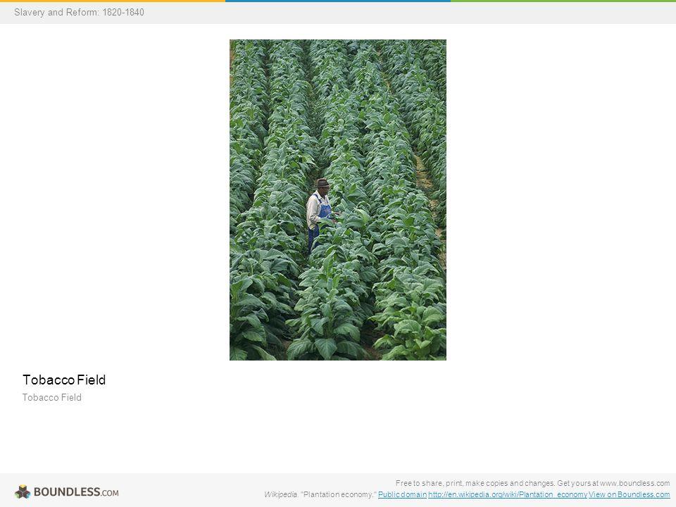 tobacco plant wikipedia