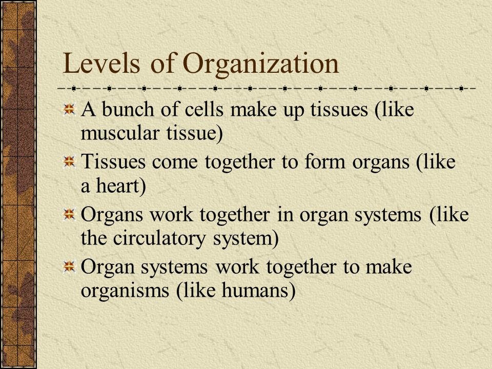 Introduction to Human Body Systems - ppt video online download