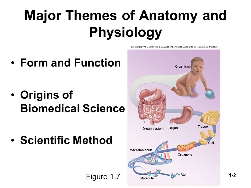 m1 m2 m3 anatomy and physiology How well does m1-m2 prepare you for m3 somehow memorizing all the layers of the gi tract for anatomy did not help me present a student doctor network.