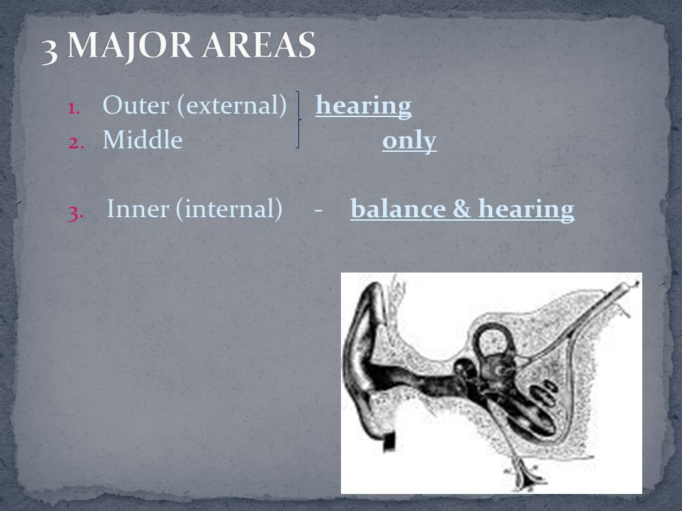 3 MAJOR AREAS Outer (external) hearing Middle only