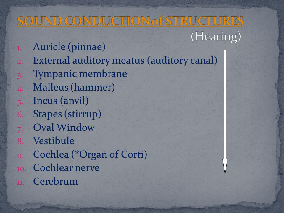 SOUND CONDUCTION of STRUCTURES (Hearing)