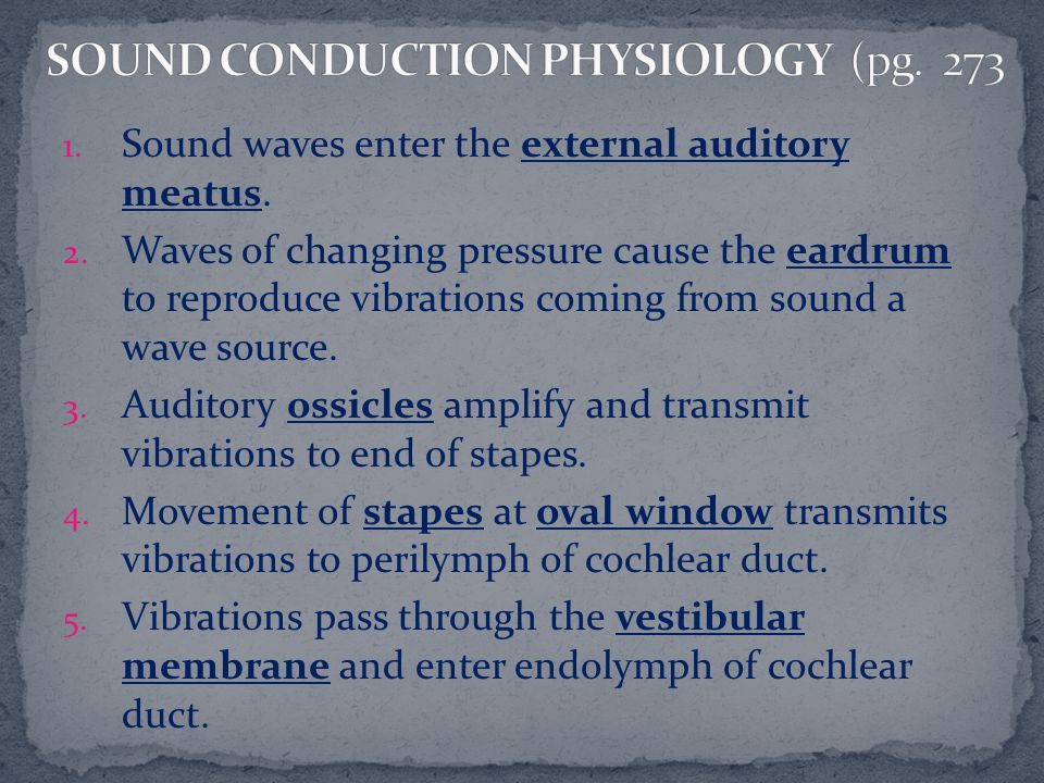SOUND CONDUCTION PHYSIOLOGY (pg. 273