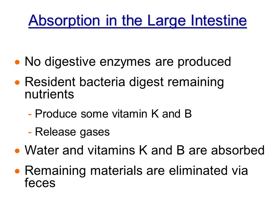 Absorption in the Large Intestine