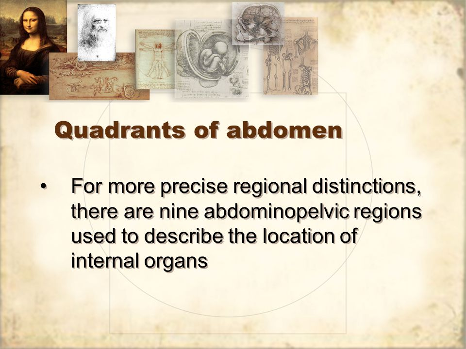 Intro to anatomy and physiology ppt video online download 45 quadrants ccuart Image collections