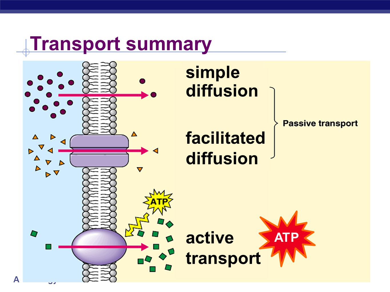 cell transport Transport across a cell membrane is a tightly regulated process, because cell function is highly dependent on maintain strict concentrations of various molecules when a molecule moves down its concentration gradient is it participating in passive transport moving up the concentration gradient requires energy making it active transport.
