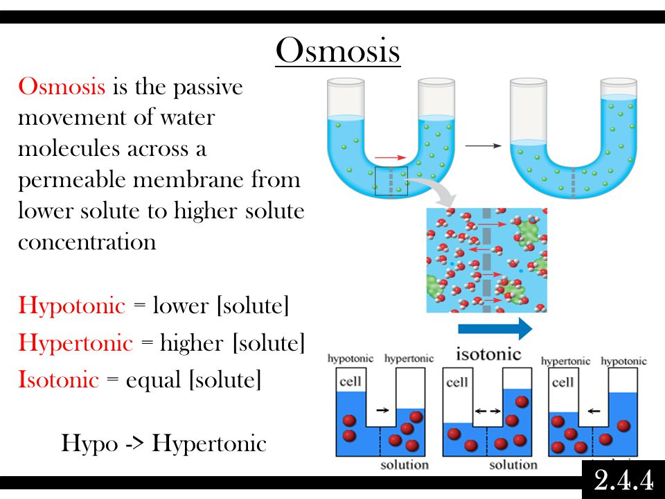 Topic - Membranes. - ppt video online download