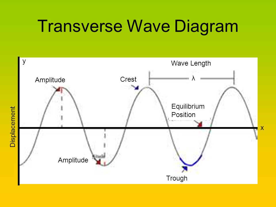 Transverse Wave Diagram