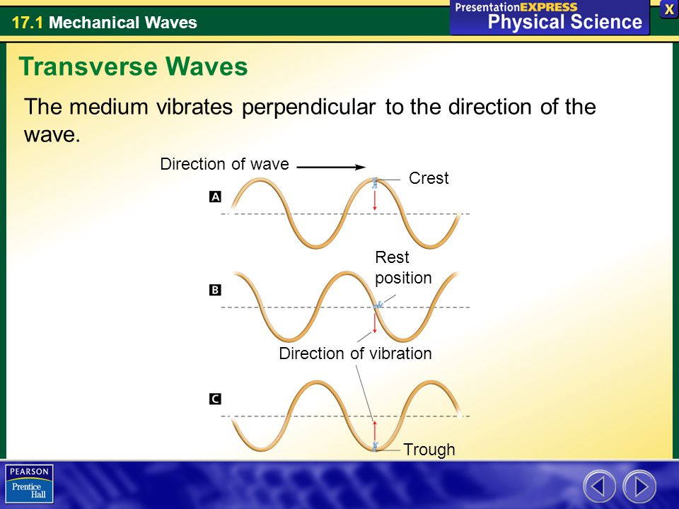 Transverse Waves The medium vibrates perpendicular to the direction of the wave. Direction of wave.