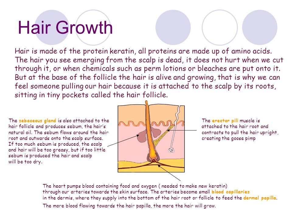 Hair Growth Hair is made of the protein keratin, all proteins are made up of amino acids.