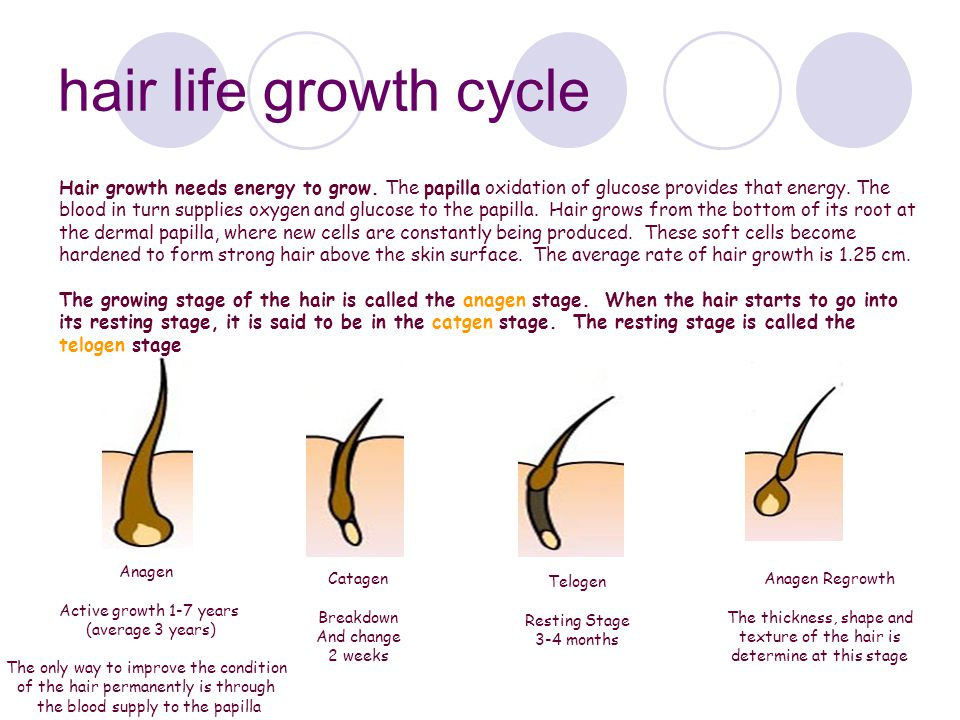 hair life growth cycle