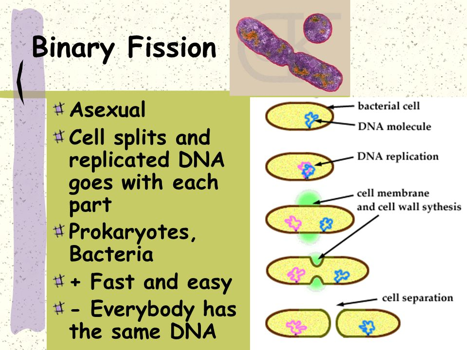 Type (asexual or sexual) Organisms that use this type ...