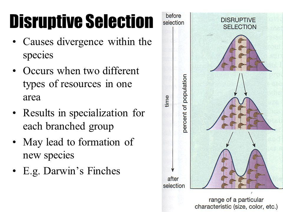 Natural Selection Examples In Elk