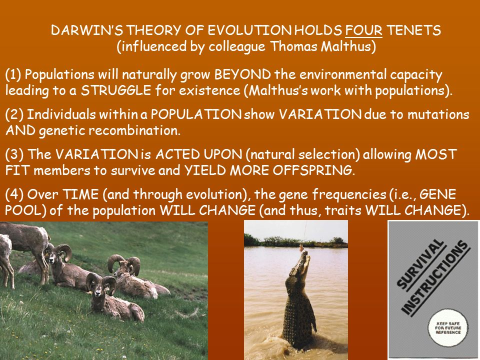 What Are The Four Tenets Of Natural Selection