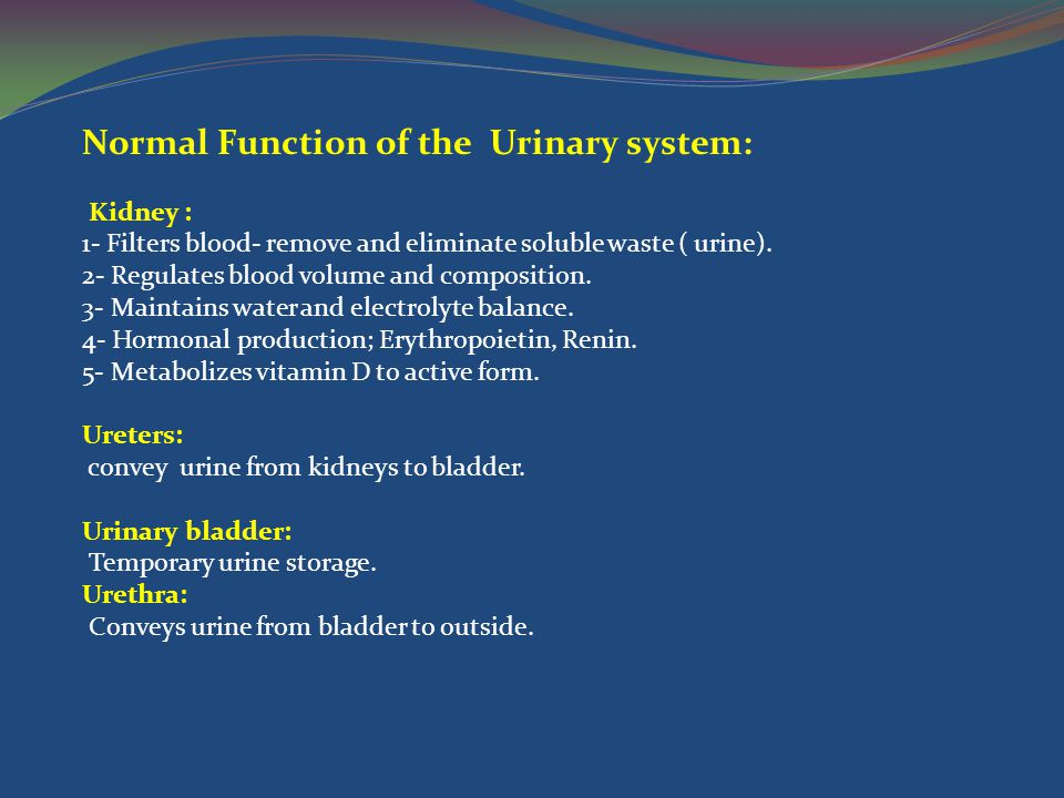 Normal Function of the Urinary system: