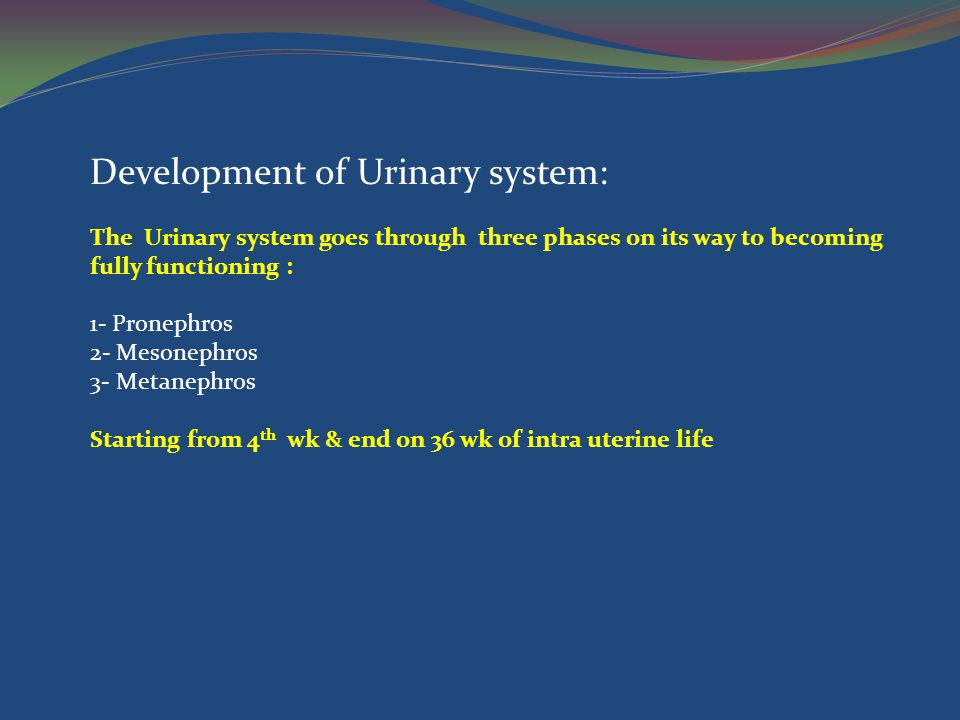 Development of Urinary system: