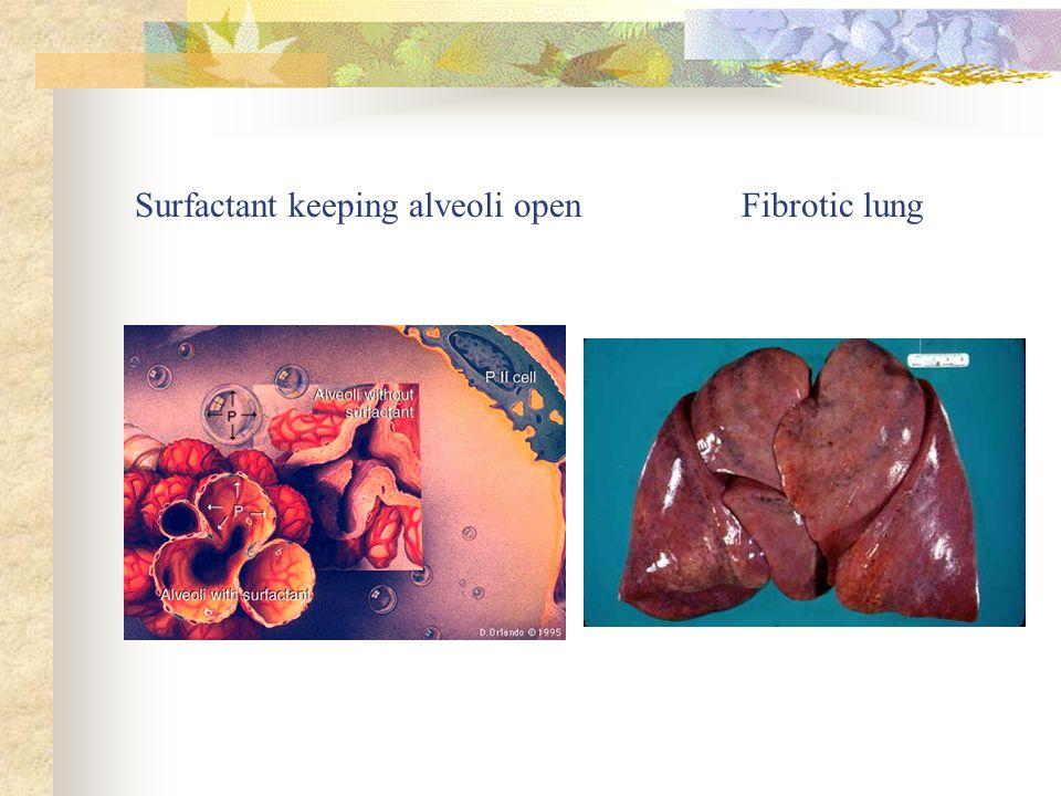 Surfactant Keeping Alveoli Open Fibrotic Lung