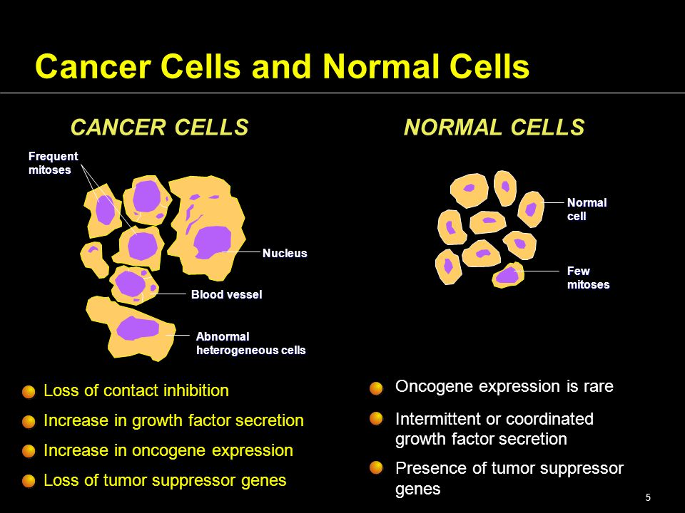 Part 1: Tumor Biology and Kinetics Introduction of ...