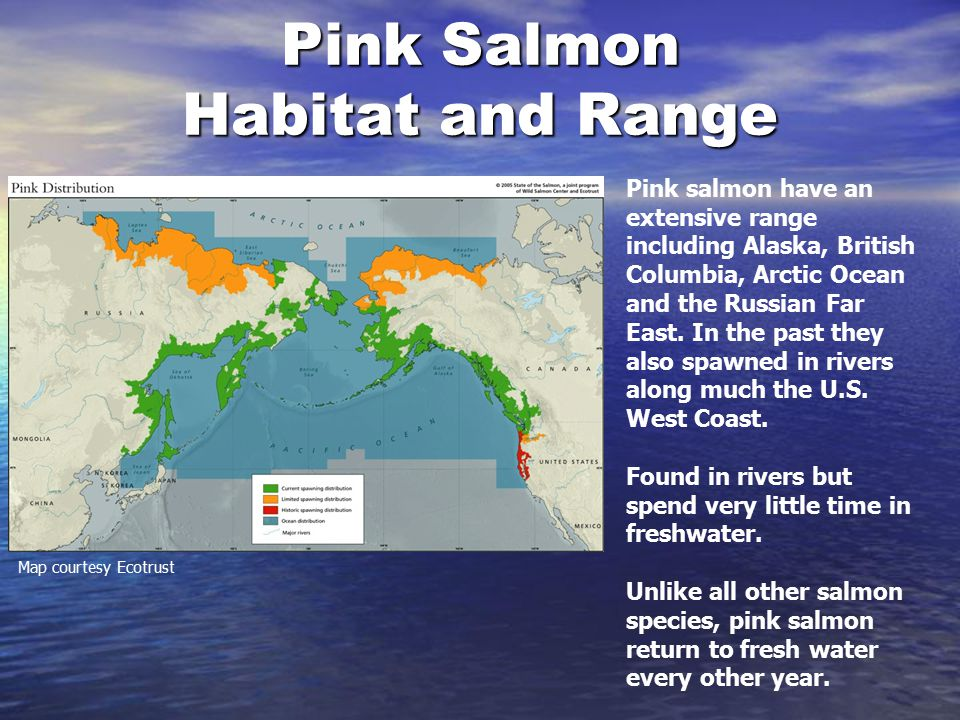 Salmon Species Oregon Department Of Fish And Wildlife Ppt Video - Salmon location map us