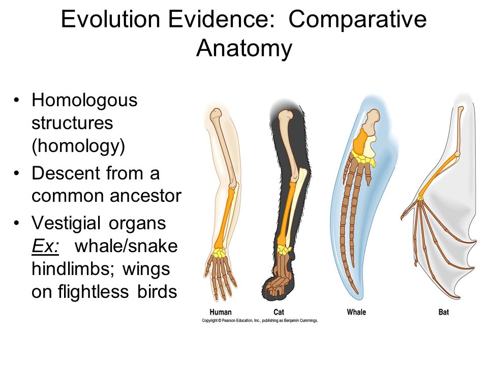 Comparative anatomy evolution 216095 - follow4more.info