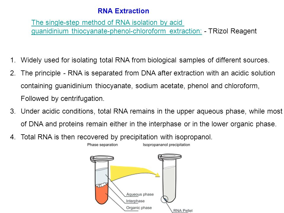 isolation and purification of rna pdf