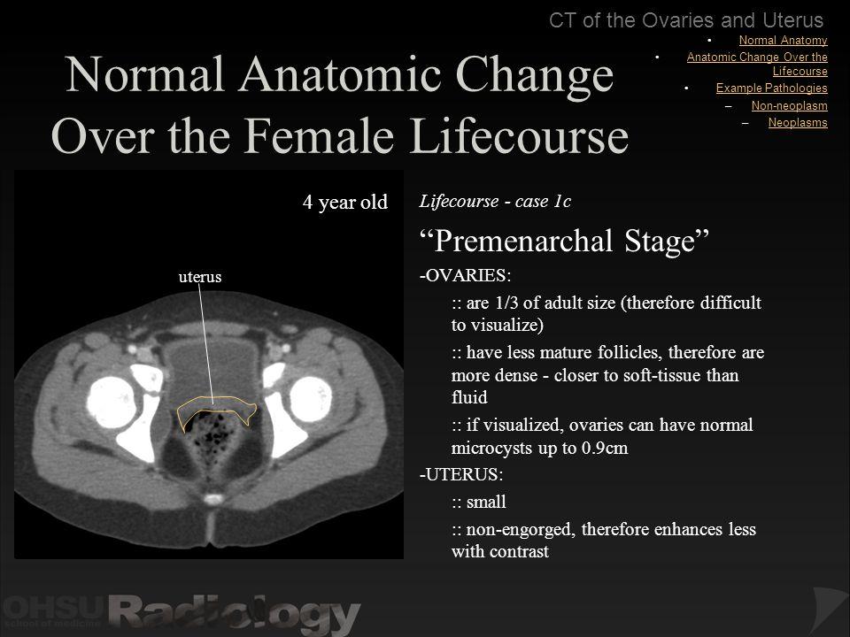 female body organs location