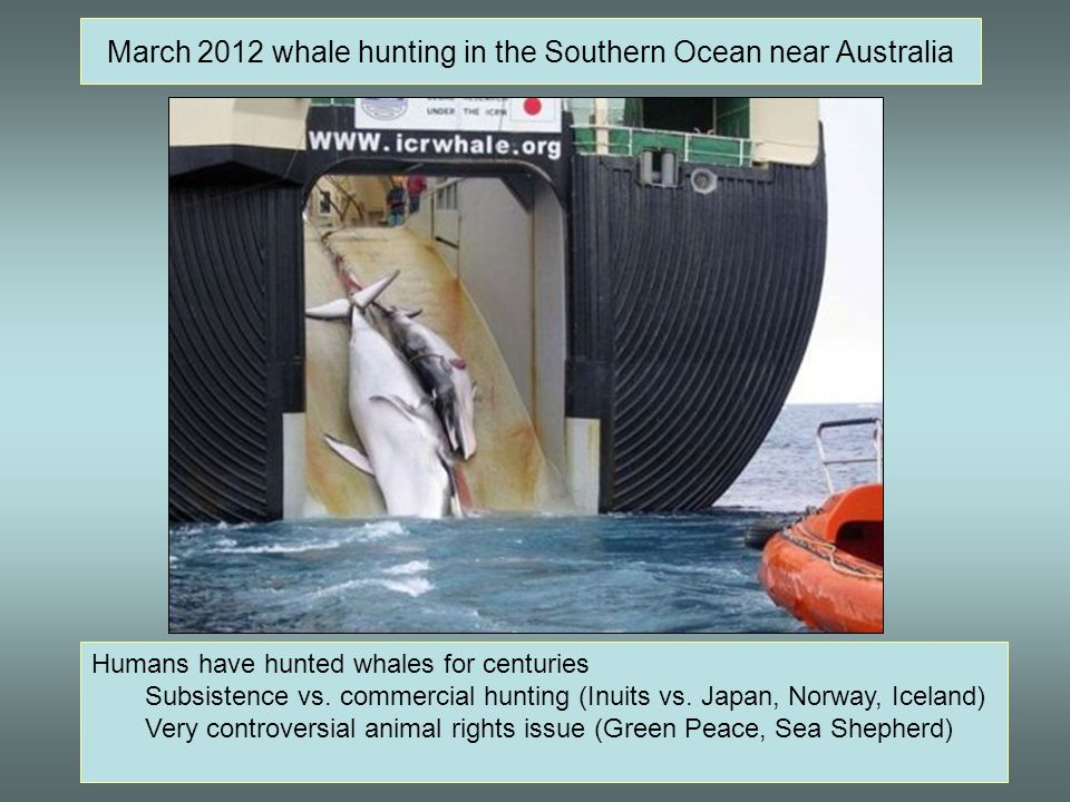 March 2012 whale hunting in the Southern Ocean near Australia