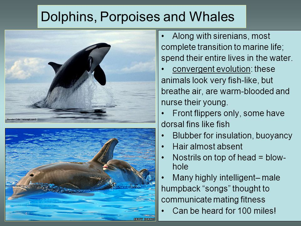 Dolphins, Porpoises and Whales