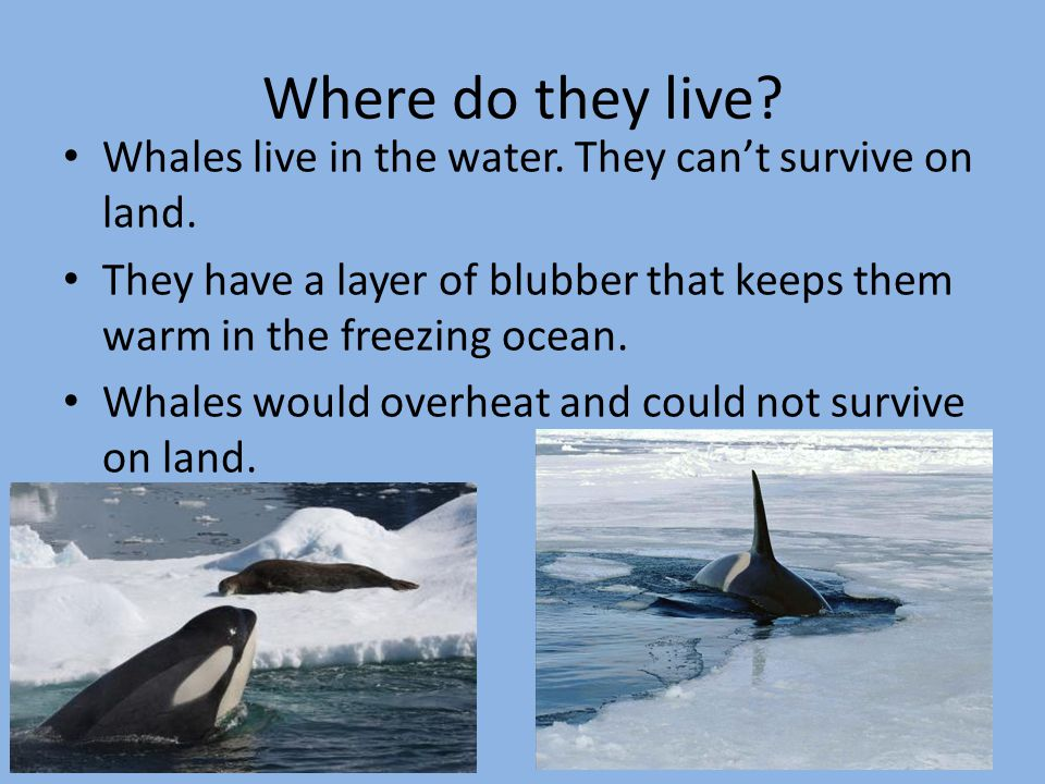 Blue Whale Where Do They Live Pictures to Pin on Pinterest ...