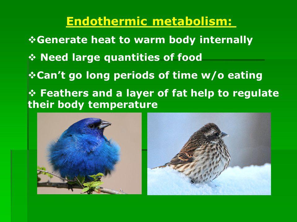 High Metabolism Rate Mean Food Digest Faster
